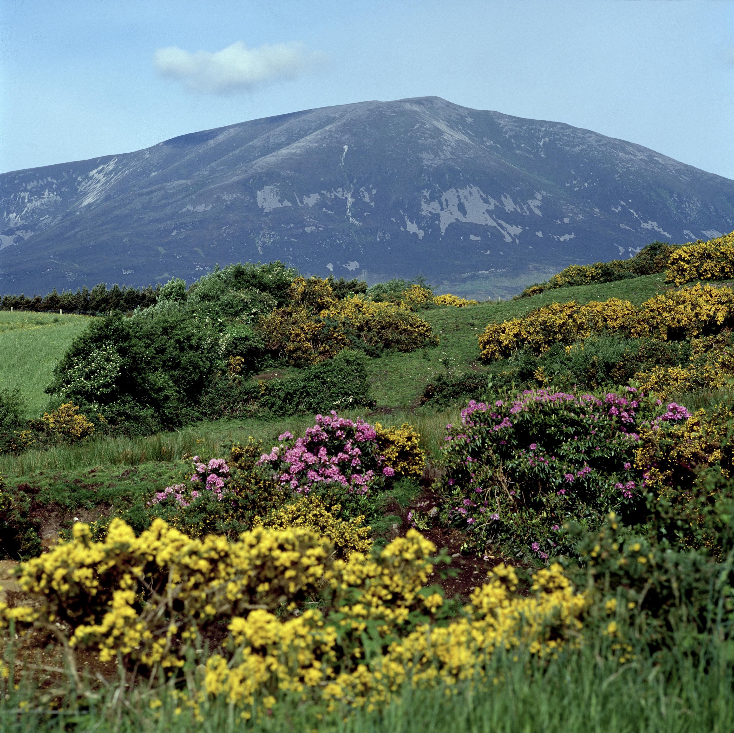 Mayo-Nephin Mountain
