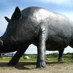 The Enniscrone Black Pig Festival 2016