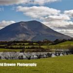 Go on a Photo Safari with David Browne