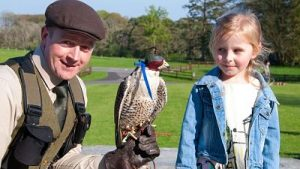 things to do with children in mayo north falconry mount falcon