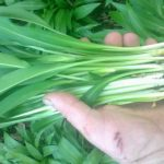 Go foraging for your food in Killala, Co. Mayo