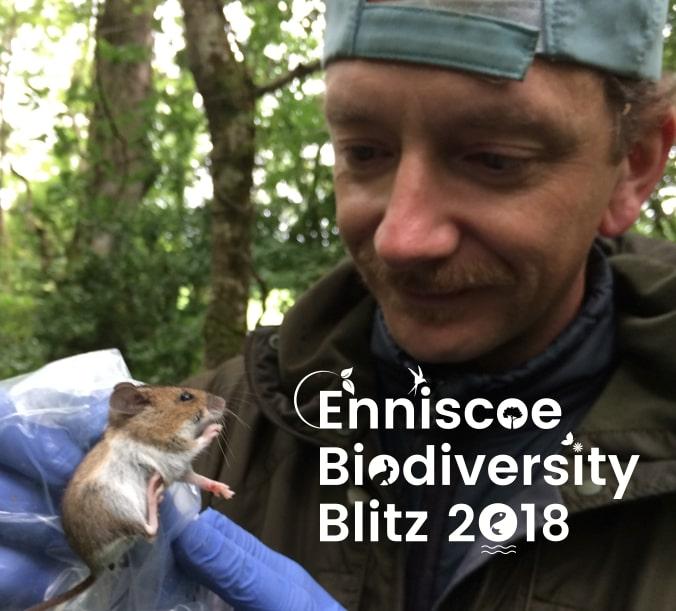 Enniscoe BioDiversity Blitz