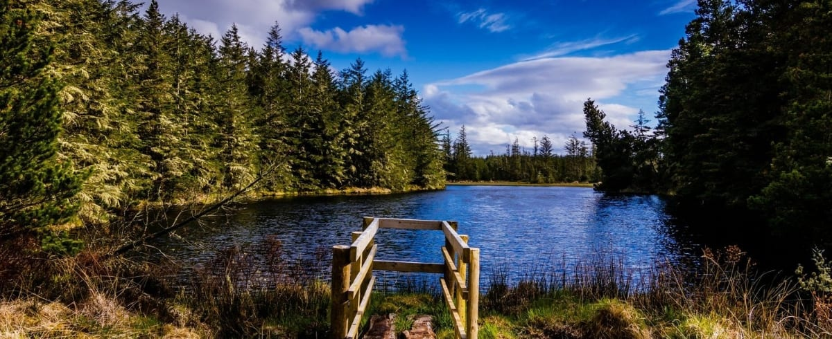 Blanemore Forest Archaeological Walk Lough Naweela by Mike Kinsella