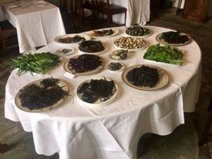 Mayo North Food Series Wild Atlantic Cultural Tours foraging Killala Mayo
