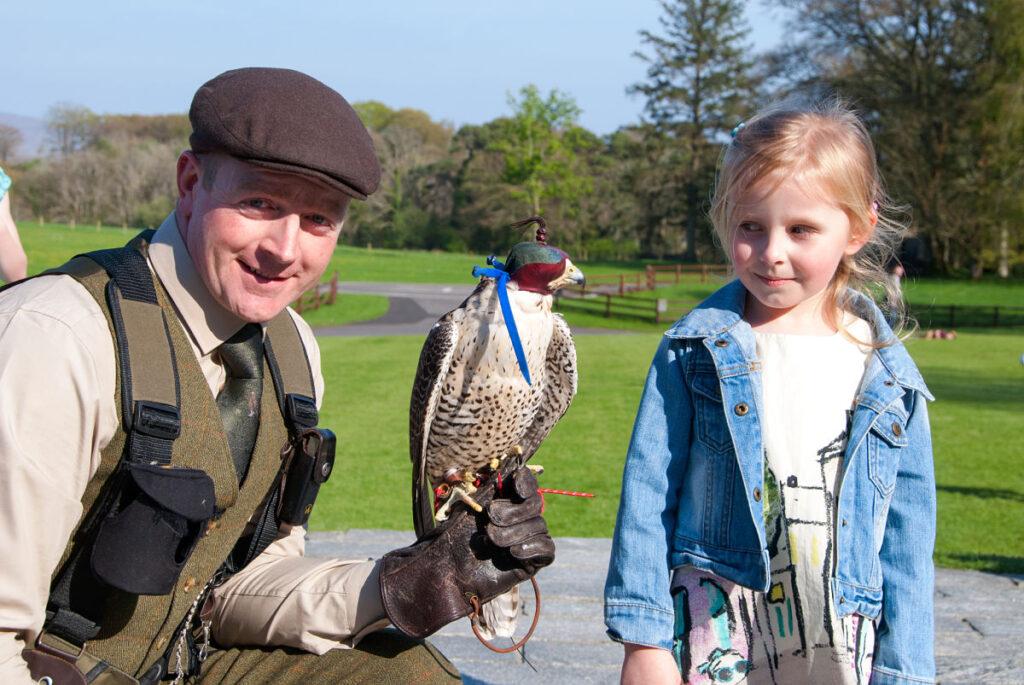The Birds of Prey Experience at Mount Falcon Estate Ballina