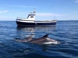 sea fishing Killala dlophins