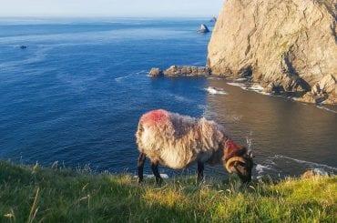Cliffs at Kilgalligan on the Carrowteige Loop Walk Co Mayo Ireland North Mayo