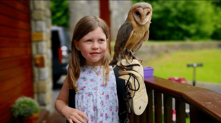 Falconry at Mount Falcon Estate Ballina, County Mayo, Ireland